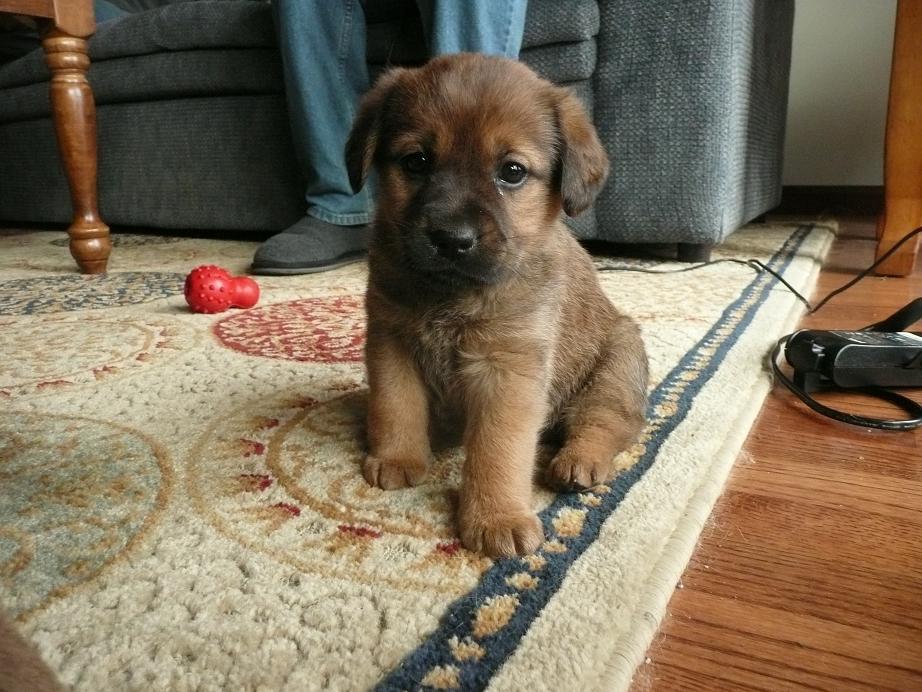 Pennsylvania Beagle Rescue  ADOPTIONS  RescueMeOrg