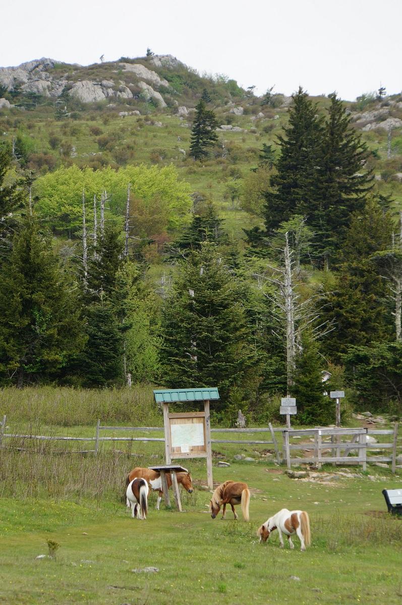 hiking grayson highlands state park