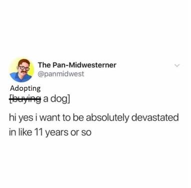 dog devastated tweet