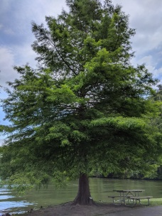 Dinner spot on Lake Lure. This is a Cypress tree, and I want one at my house