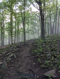 The Bearwallow trail is an easy climb to the open pasture at the top, with excellent mountain views.