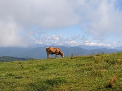 magestic alpine pasture at the top of bearwallow mountain